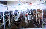 Meat and dairy product Tycoon Speaks on first processing Plant in the Gambia